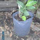 Cloth Planter Bags2